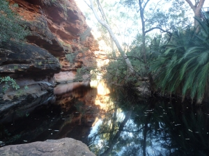 watering hole in Kings Canyon
