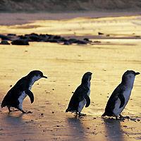 photo courtesy of www.partner.viator.com