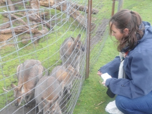 Becks making friends with the wallaby's