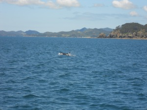 Whale's and Island's in the distance